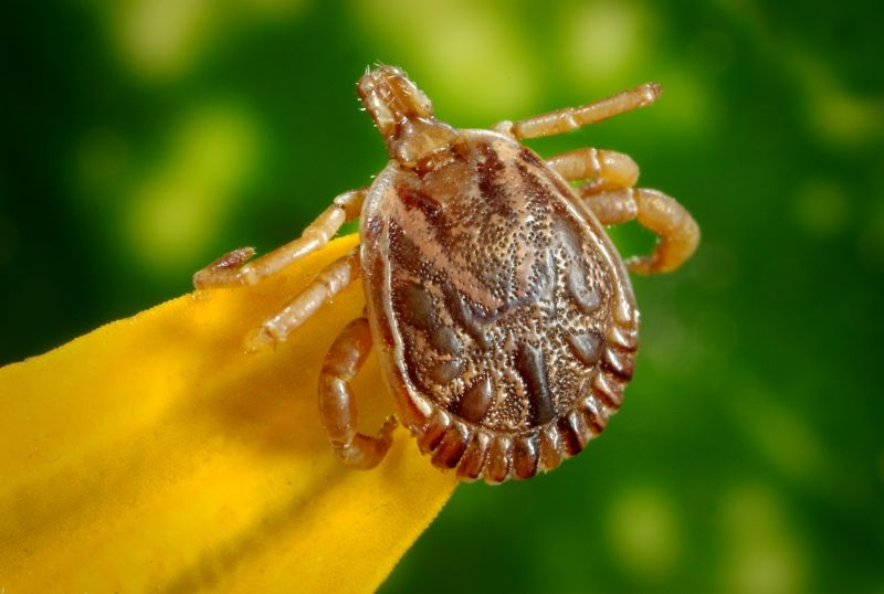 Tick Repellent – stay safe when outdoors, repel ticks